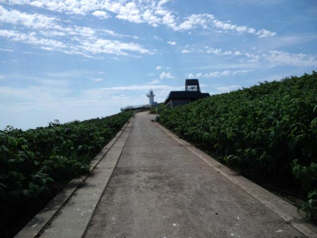天売島フラリ旅③